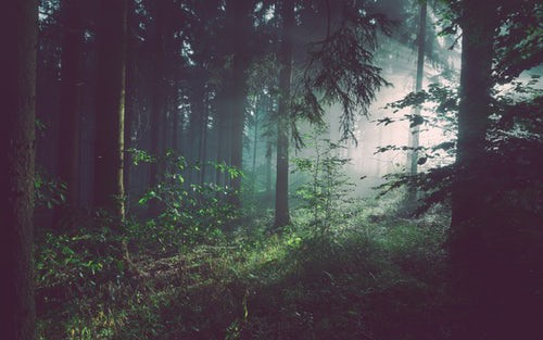 Anomaly Detection With Isolation Forests Using H2O - DZone AI