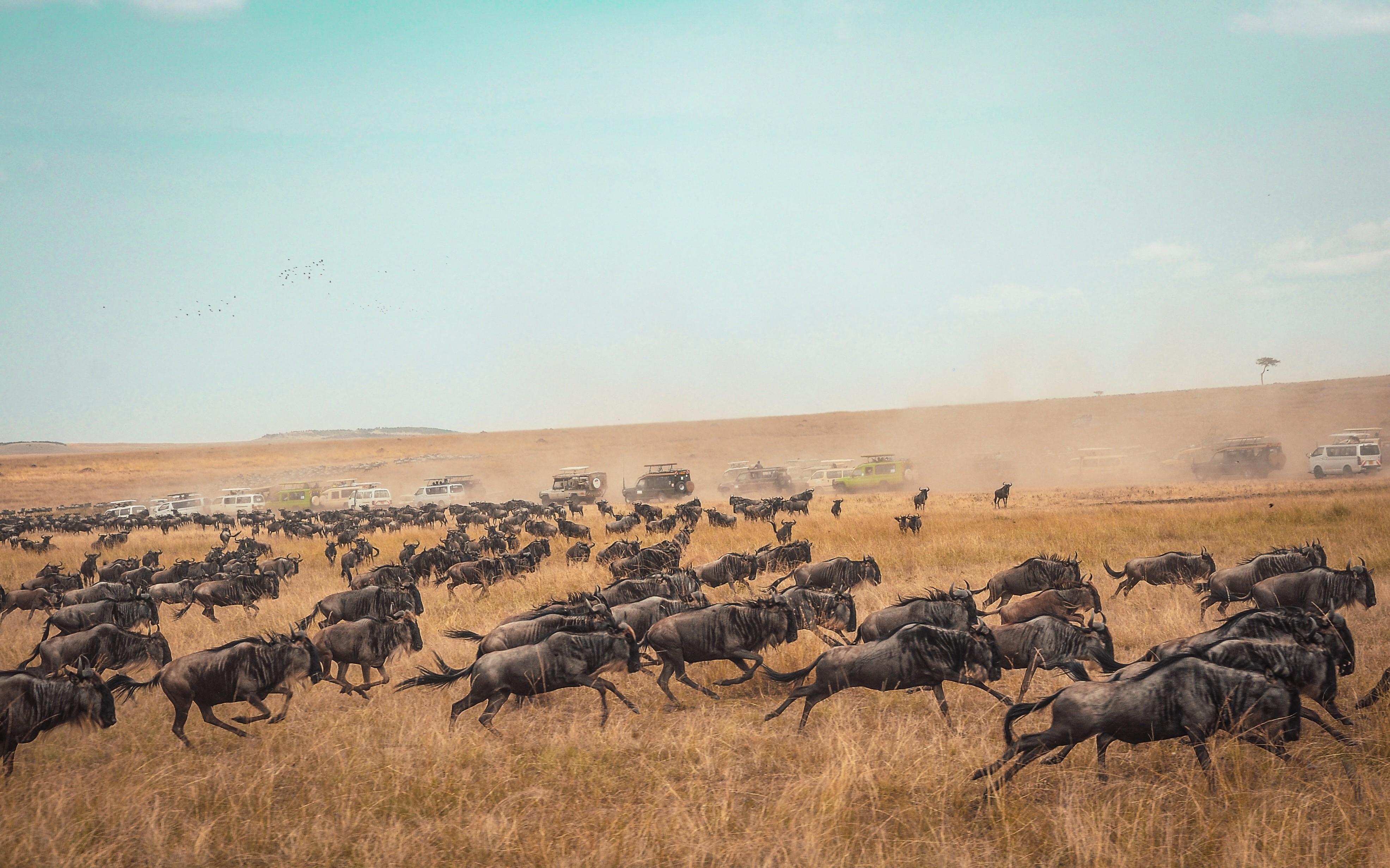 Migrating MySQL Data to ElasticSearch Using Logstash