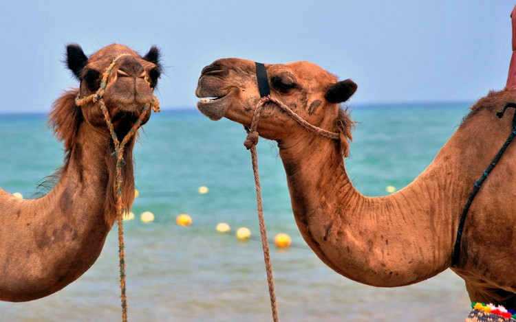 Microservices With Apache Camel - DZone Microservices