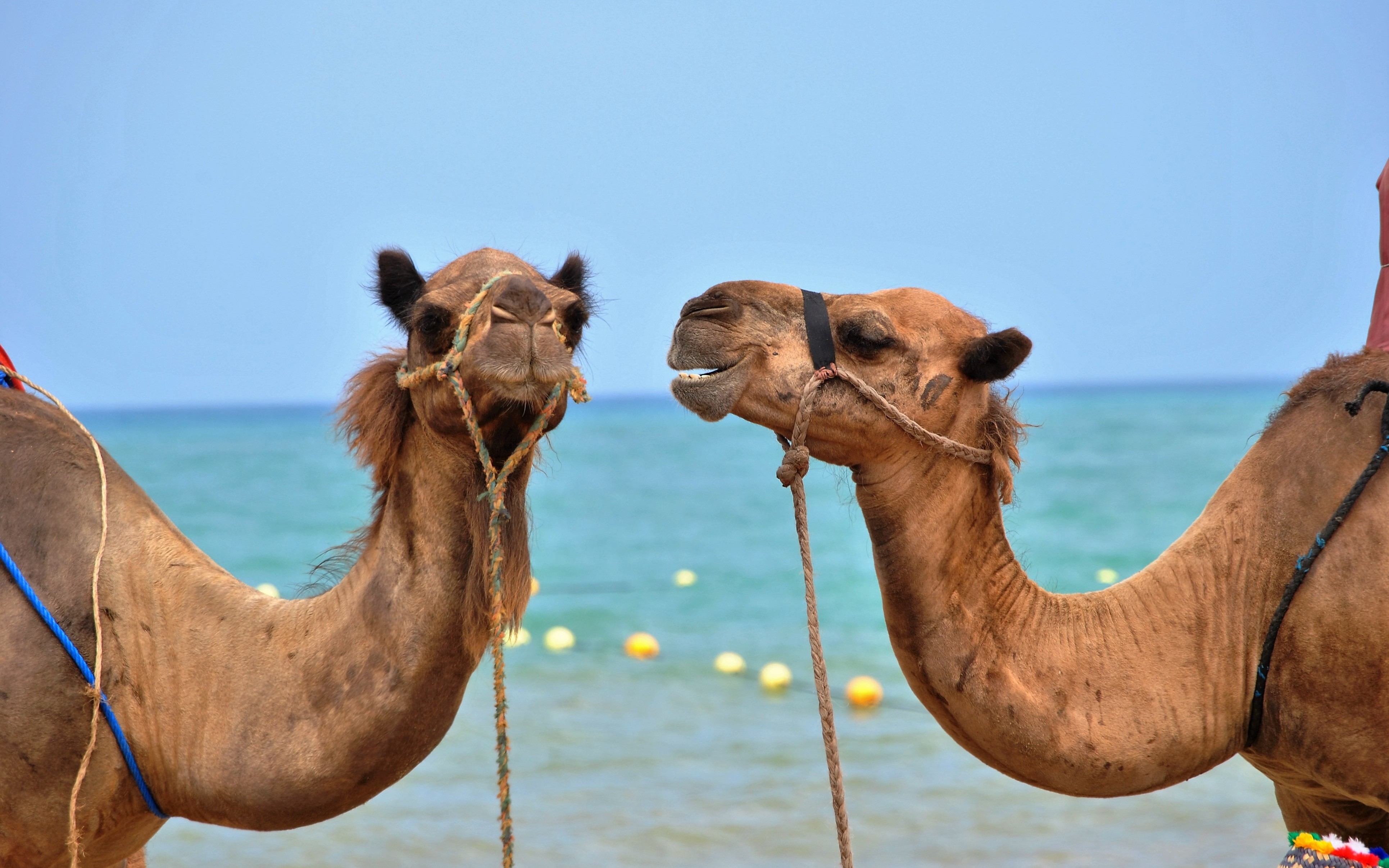 Apache Camel 2 19 Released - What's New - DZone Integration