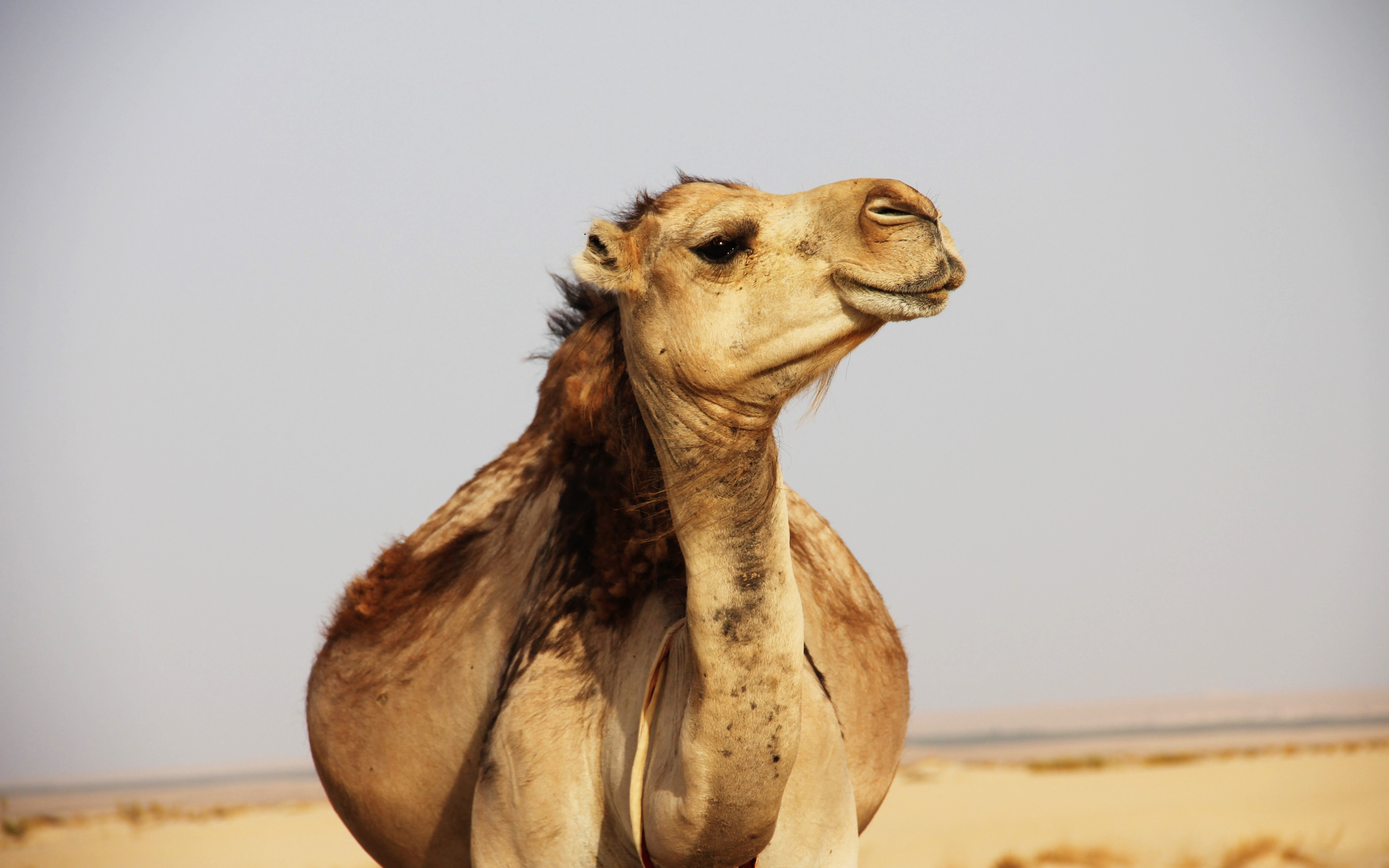 Using Camel-Undertow Component for Supporting an http2