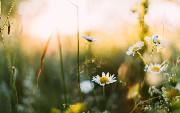 This Week in Spring: NoHTTP, Organizational Consistency, Kotlin...