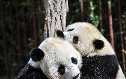 Pandas One Line Magical Code for EDA: Pandas Profile Report