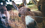 How to Configure and Use Secure Properties In Mule 4