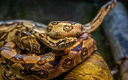 10 Python Particulars to Know