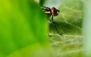 Jakarta EE & Wildfly Running on Kubernetes