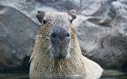 Capybara Setup With Chrome Headless Webdriver on CircleCI With Ruby on...