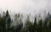 Fog Computing is the Future