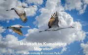 Migration from Mulesoft to Kumologica: Analyzing Broadcast Pattern