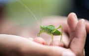 Protect Your Code From Bugs: An Overview of Five Static Analyzers for Java...