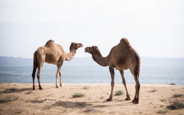 REST Services With Apache Camel