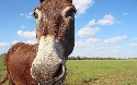 Secure Sensitive Data With Mule Credentials Vault