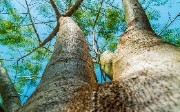 Top 5 jQuery Plugins for Tree View