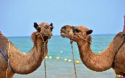 Apache Camel 2.19 Released - What's New
