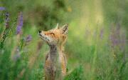 Foxdriver: A Node.js Remote Debugging Client