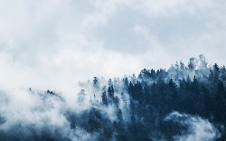 The Edge Is Nothing Without the Fog