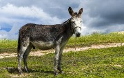 Introduction To Mule API Security: Simple Authentication